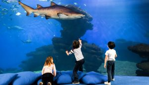 A view of the big shark tank in Palma aquarium